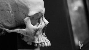 Skull 2 BW